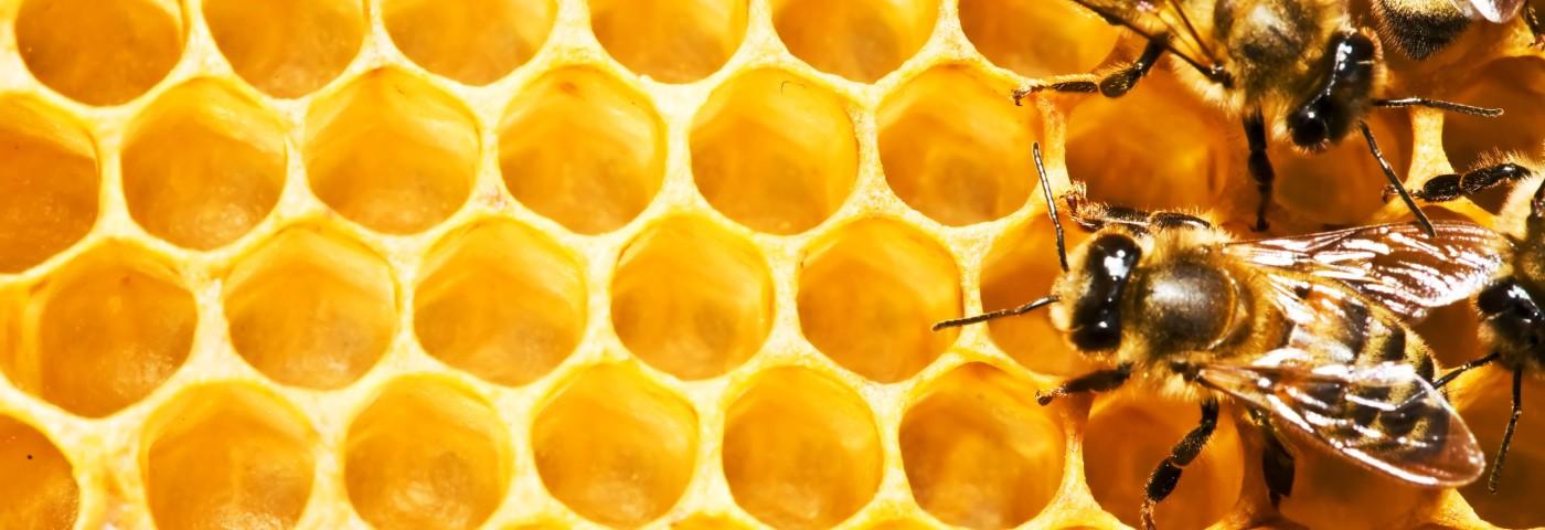 abejas-cera-de-abejas-164714-1400x480